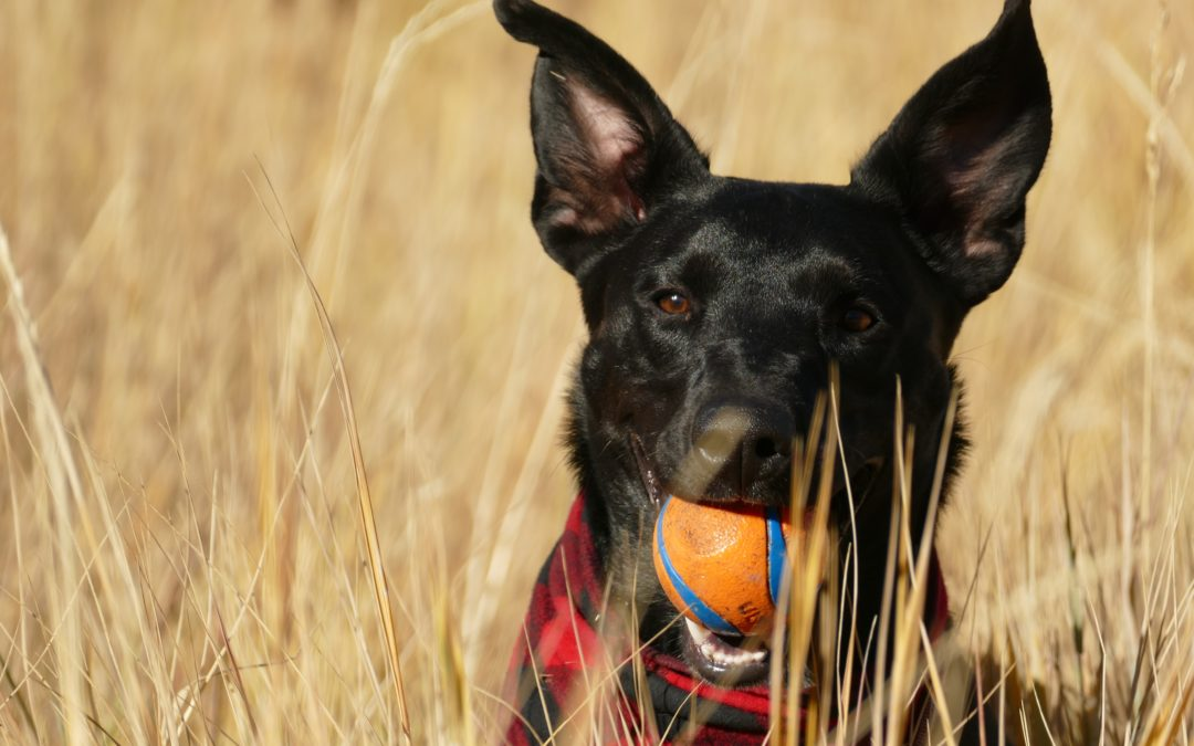 The 4 Types of Dog Toys You Need to Buy.