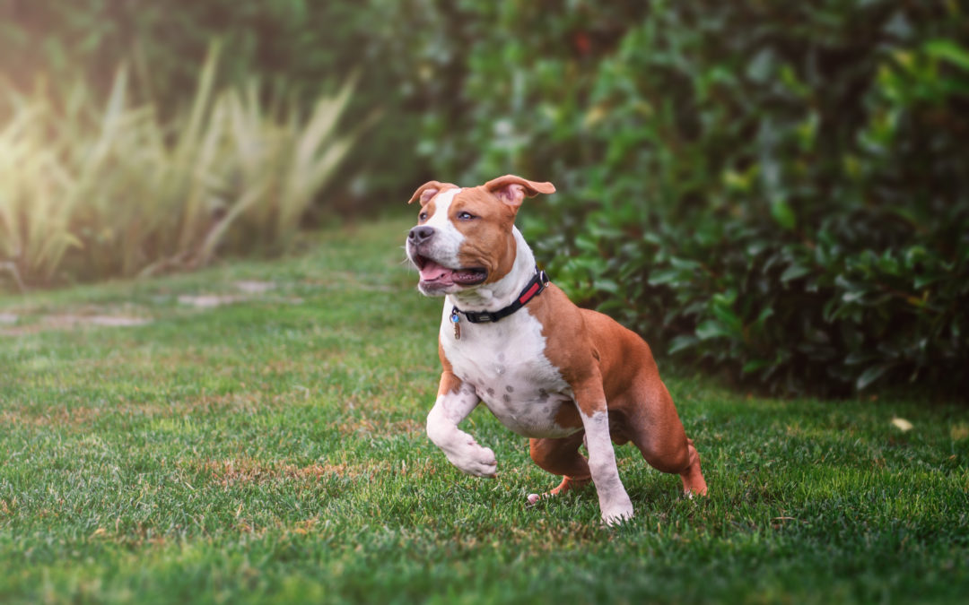 What to do When Your Dog Goes Missing